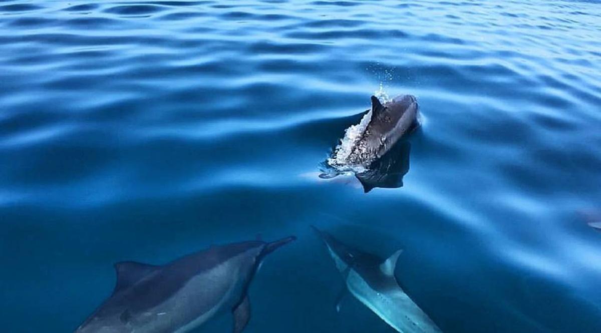 Dolphins Na Pali Coast on Kaua'i.