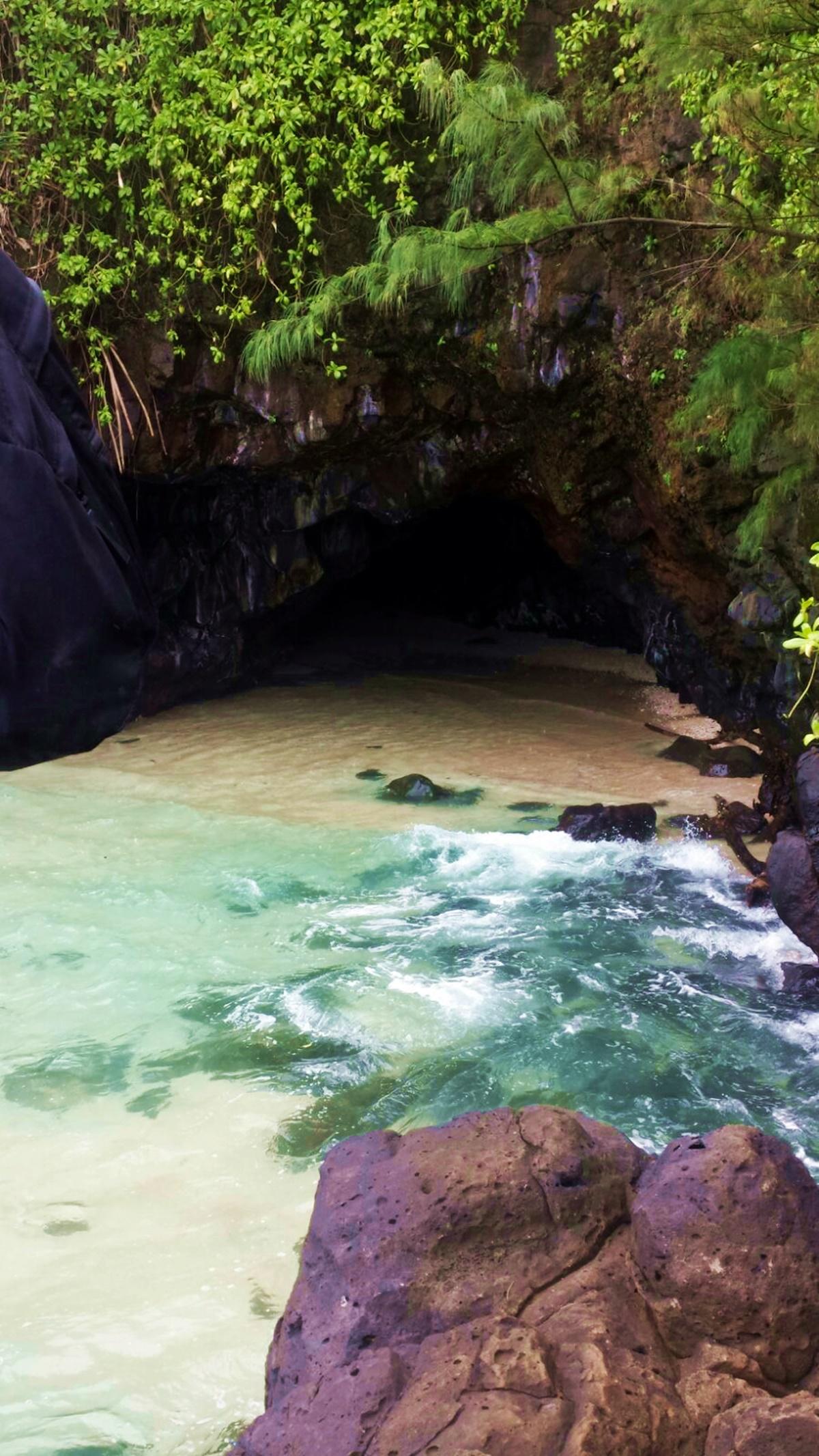 Turtle Cove Kaua'i.